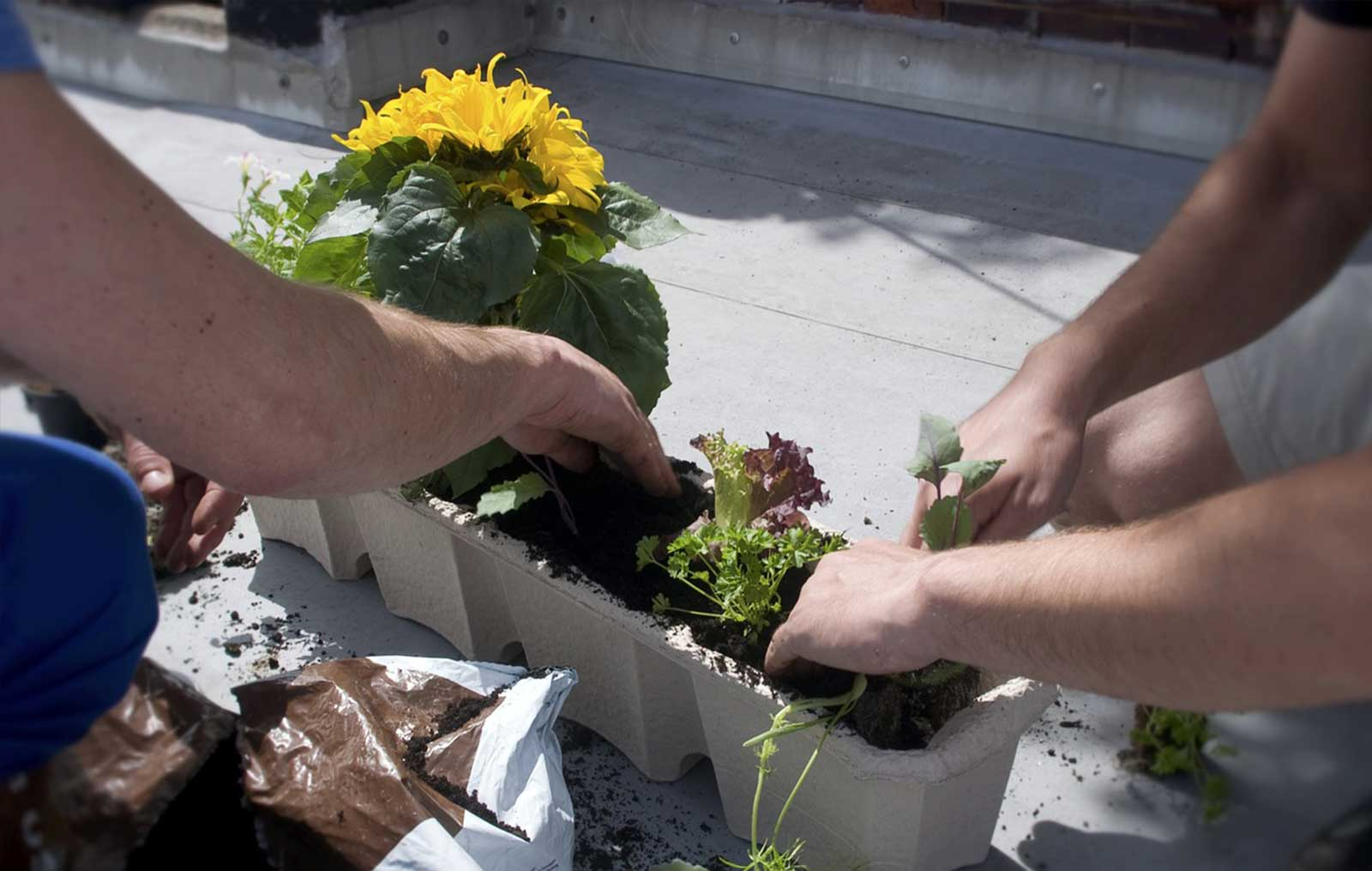 Establishing of edible gardening