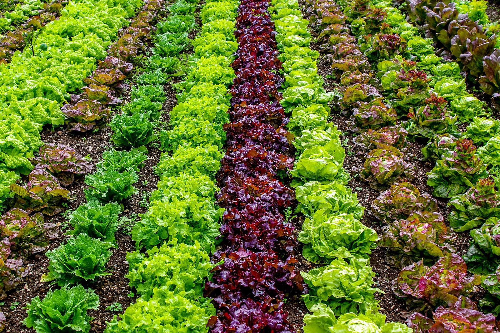 Food production and climate change